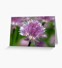 Chive Flower & Bokeh Greeting Card