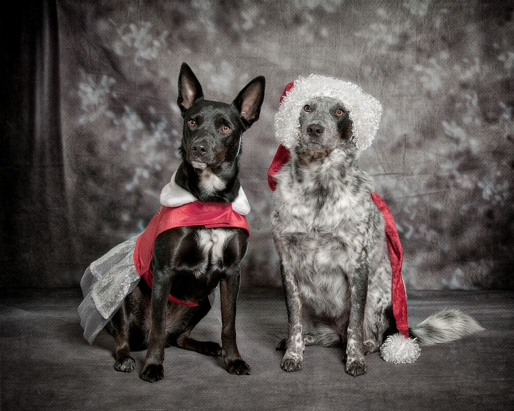 Ready For Christmas Ball by Bobby Acree