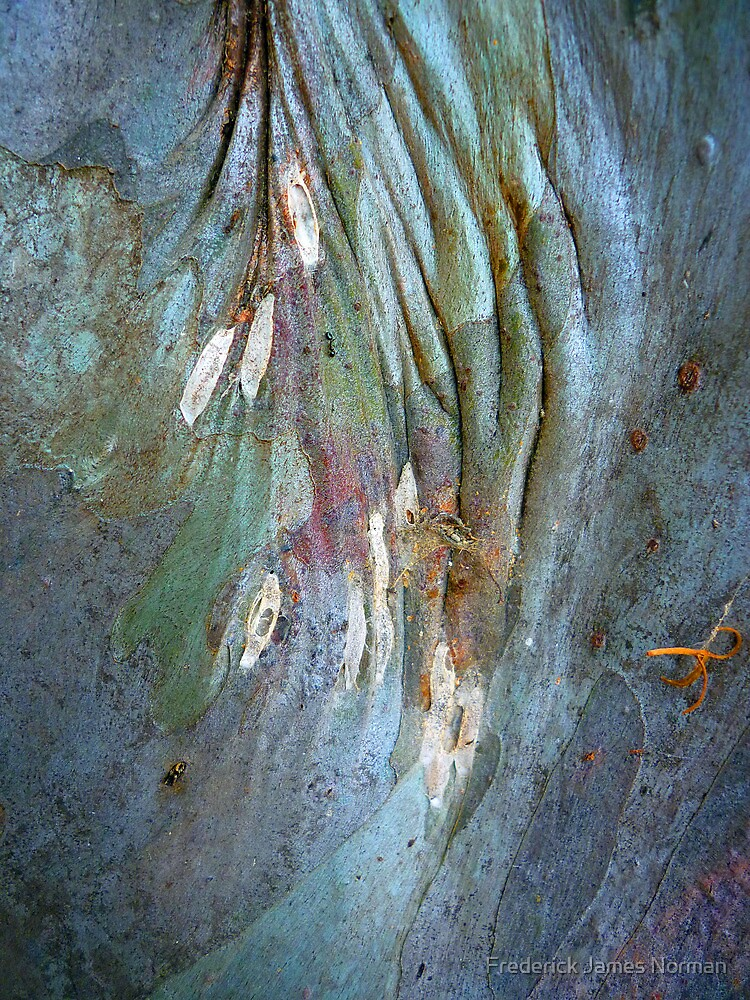 Bark Abstract # 15 by Frederick James Norman