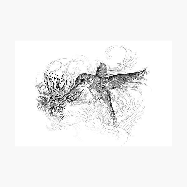 Hummingbird and Flower Black Line Design Photographic Print