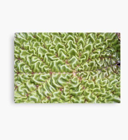 wrinkled leaf Canvas Print