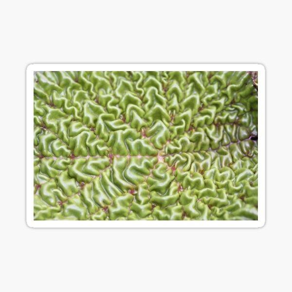 wrinkled leaf Sticker