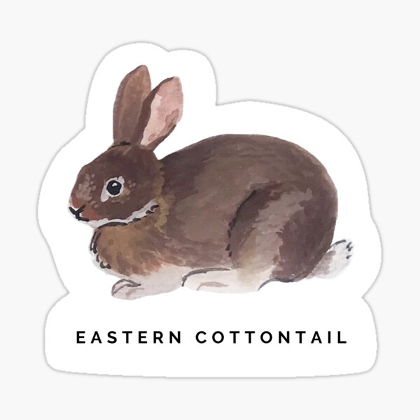 Eastern Cottontail Rabbit Sticker