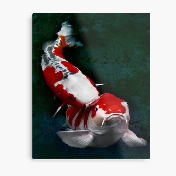 Koi fish kissing Metal Print