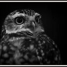 burrowing owl by NordicBlackbird
