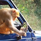 No Monkey Business. by Rahul Kapoor