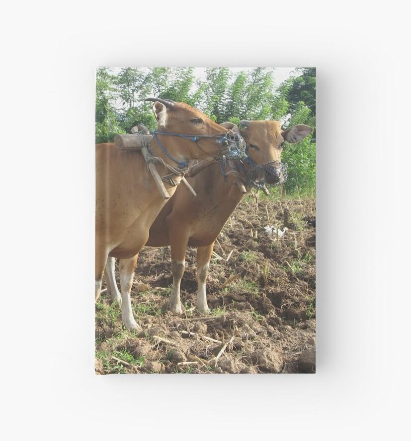 Farmer ploughing his field, Pemuteran, Bali, Indonesia by Maurits