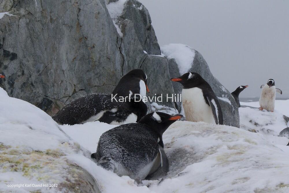 Penguin 007 by Karl David Hill