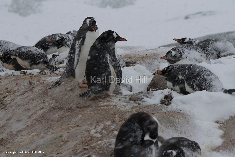 Penguin 010 by Karl David Hill