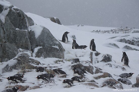 Penguin 011 by Karl David Hill