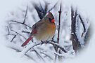 Female Cardinal in the Snow by Sandy Keeton