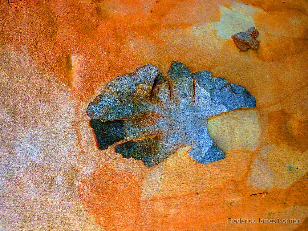 Bark Abstract # 16 by Frederick James Norman