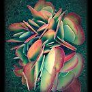 Beautiful Succulent in Garden by SunShineInMySky