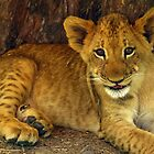Lion Cub by JenniferLouise