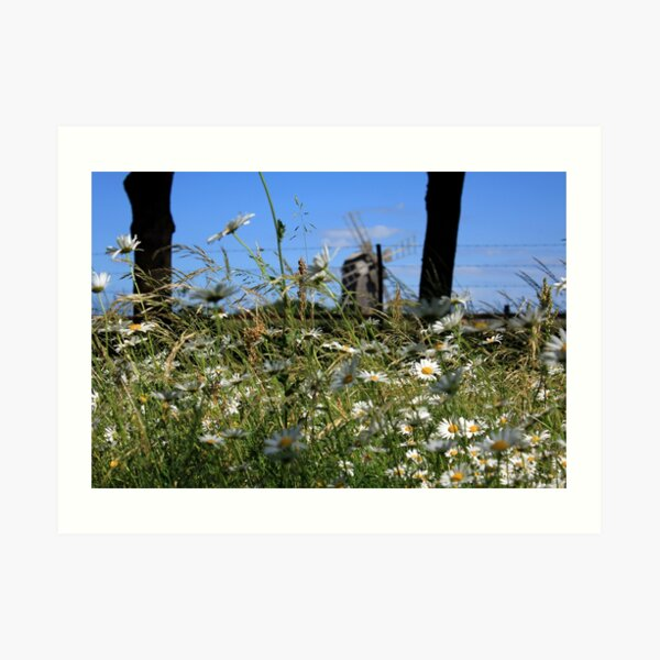 than lying in the grass on a summer meadow. Art Print