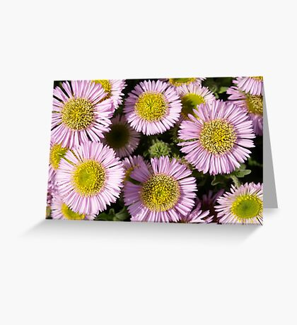 Beach Asters Greeting Card