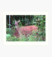 Doe, a Deer... Art Print