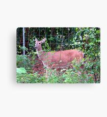 Doe, a Deer... Canvas Print