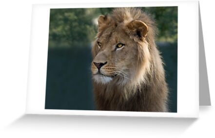 Magnificent Presence by Sue  Cullumber
