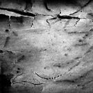 Black & White Abstract Bark # 2 by Frederick James Norman