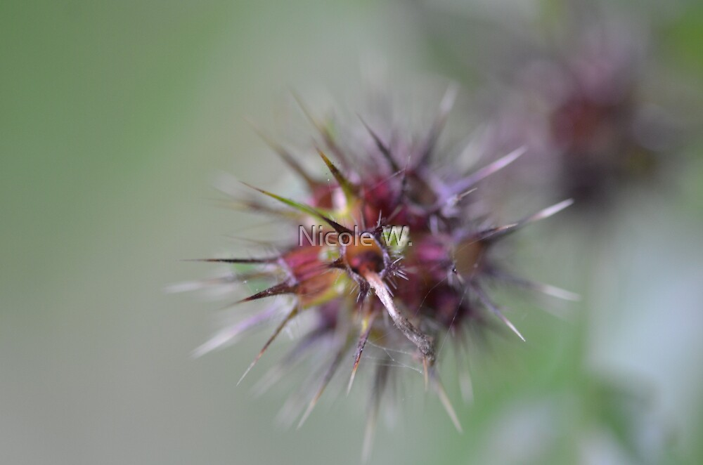 Prickly thing by Nicole W.