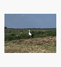 Lonely Stork Photographic Print