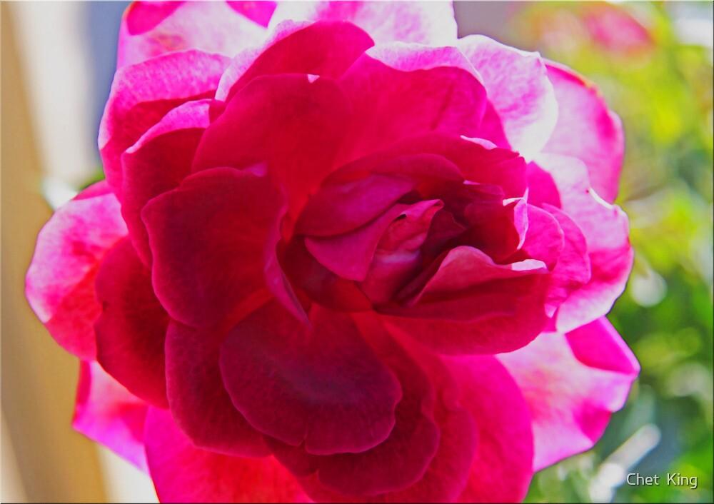 Rosie Rose by Chet  King