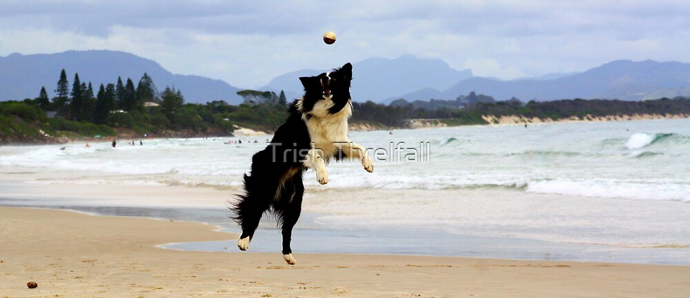 Dogs  Day at the Bay  by Trish Threlfall