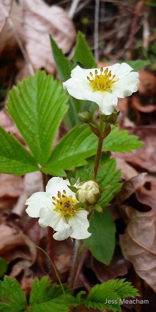 Strawberry Flower by Jess Meacham
