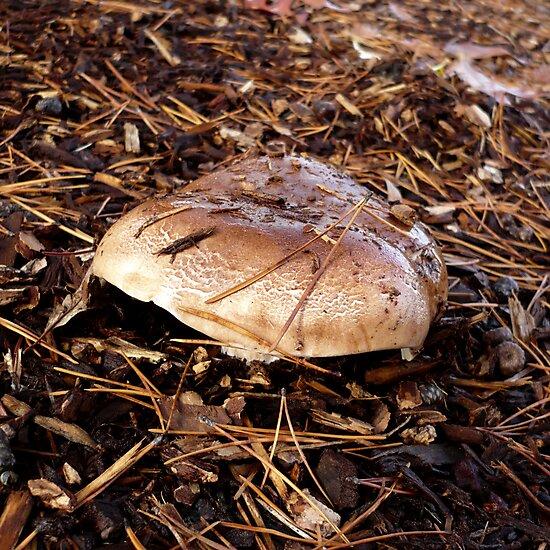 Brown Mushroom by Jess Meacham