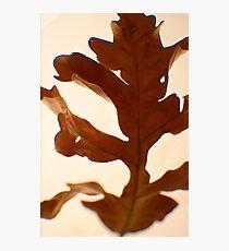 Oak Leaf -Fall Foliage Series Photographic Print