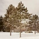 The Pines by KBritt