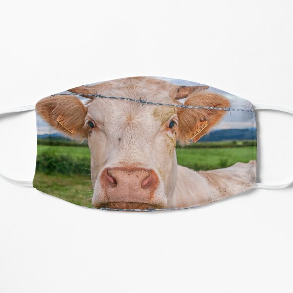 Curious cow Mask