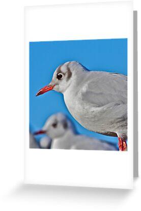 Gull by John Thurgood