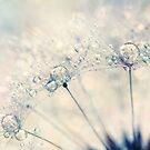 Dandy Drops by Sharon Johnstone