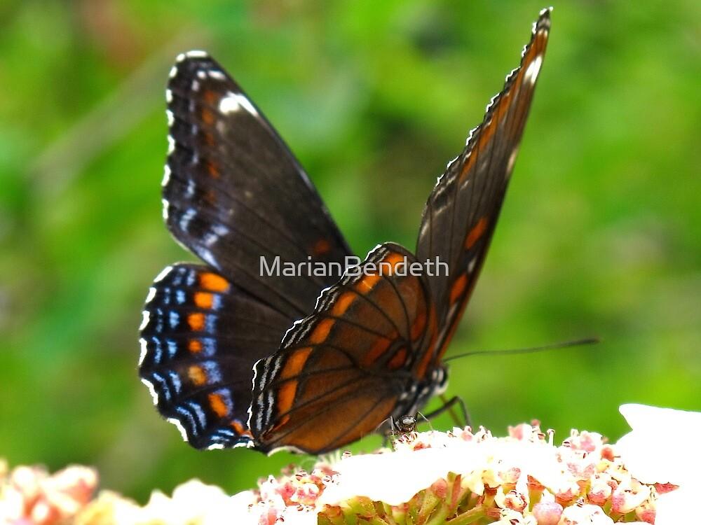 Fluttering butterfly wings by MarianBendeth