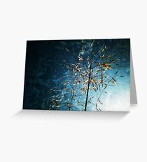 Golden oat against a blue summer sky. Greeting Card