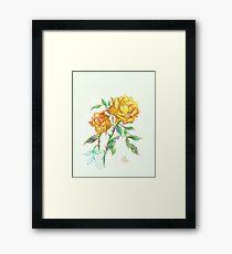 Golden Yellow Miniature Rose  Framed Print