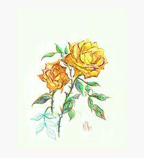 Golden Yellow Miniature Rose  Photographic Print