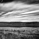 Tamar River grasses by Alastair Creswell