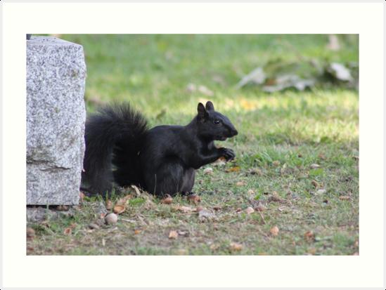 Black Squirrel by Vicki Spindler (VHS Photography)