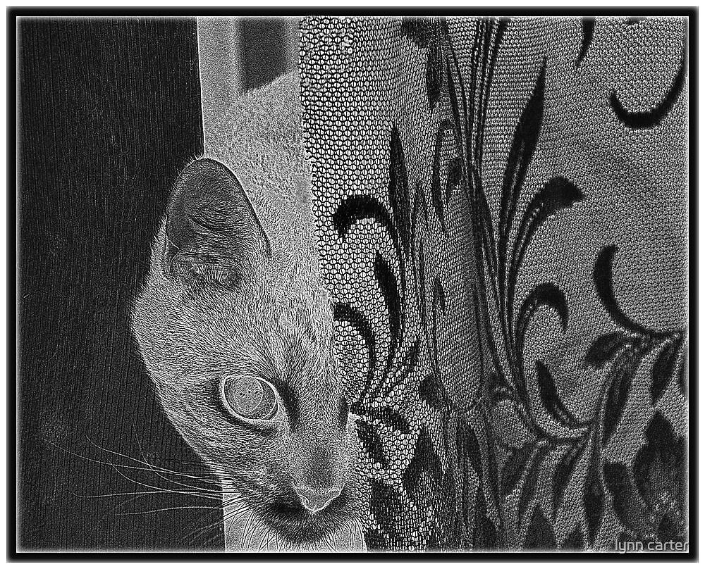 Peeping Puss by lynn carter