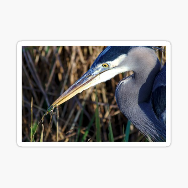Grey heron and frog Sticker
