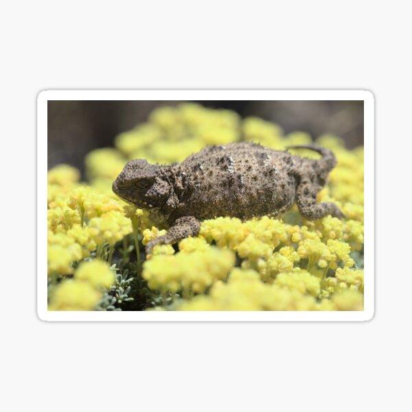 Pygmy shorthorn lizard Sticker