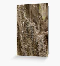 Spanish Moss Greeting Card