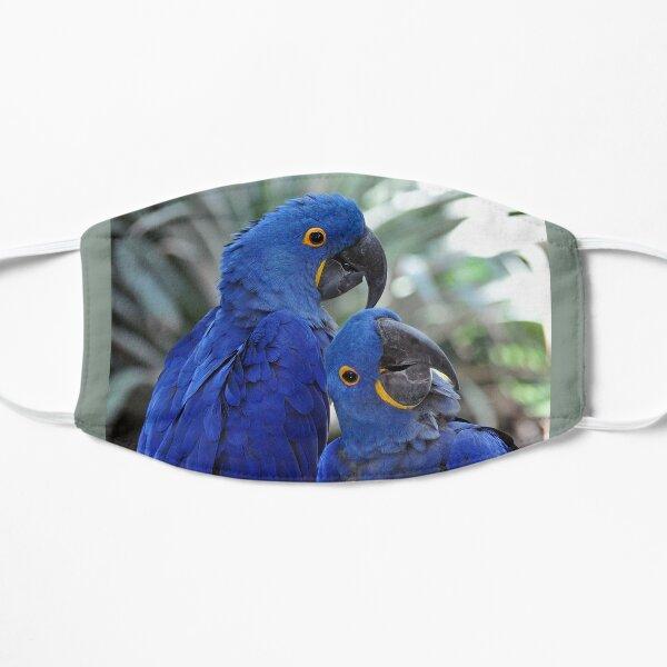 Blue Parrots Flat Mask