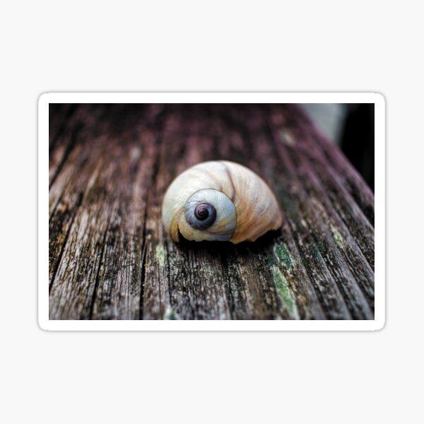 Snail shell Sticker