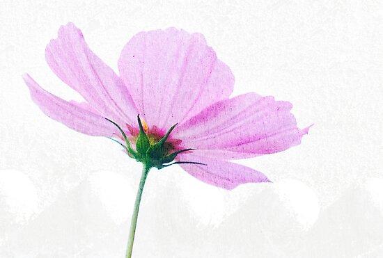 Schön in pink von Clare Colins
