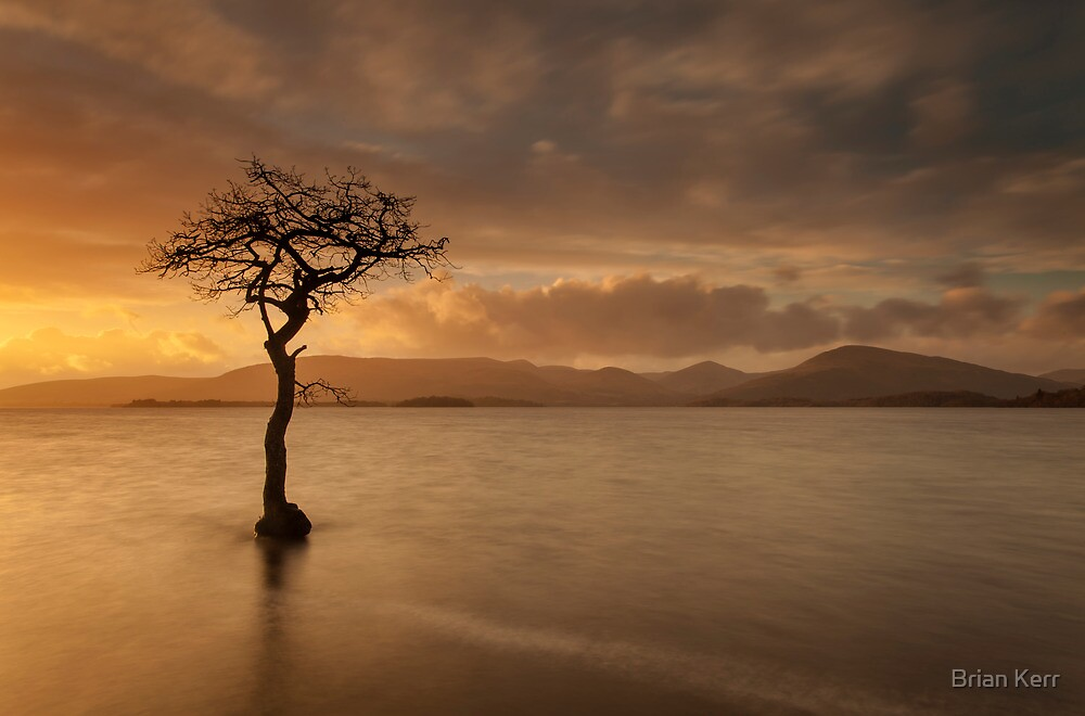 The Tree of Milarrochy by Brian Kerr