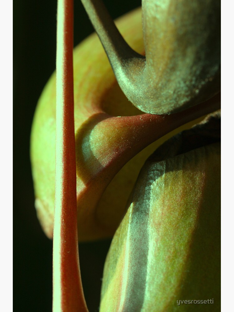 vegetal sensuality by yvesrossetti